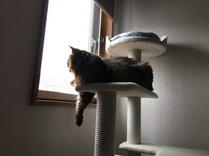 キャットタワーから前脚がはみだす猫