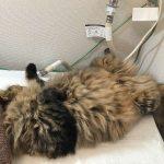 洗濯機の上で寝る猫