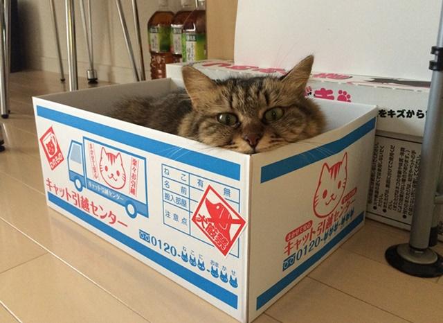 にゃんぼーるに入る猫