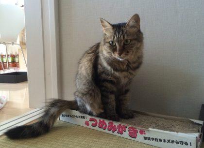 爪とぎの上に座る猫
