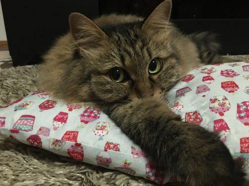枕に顔を乗せてこちらを見る猫