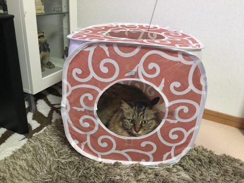 プレイキューブにこもる猫