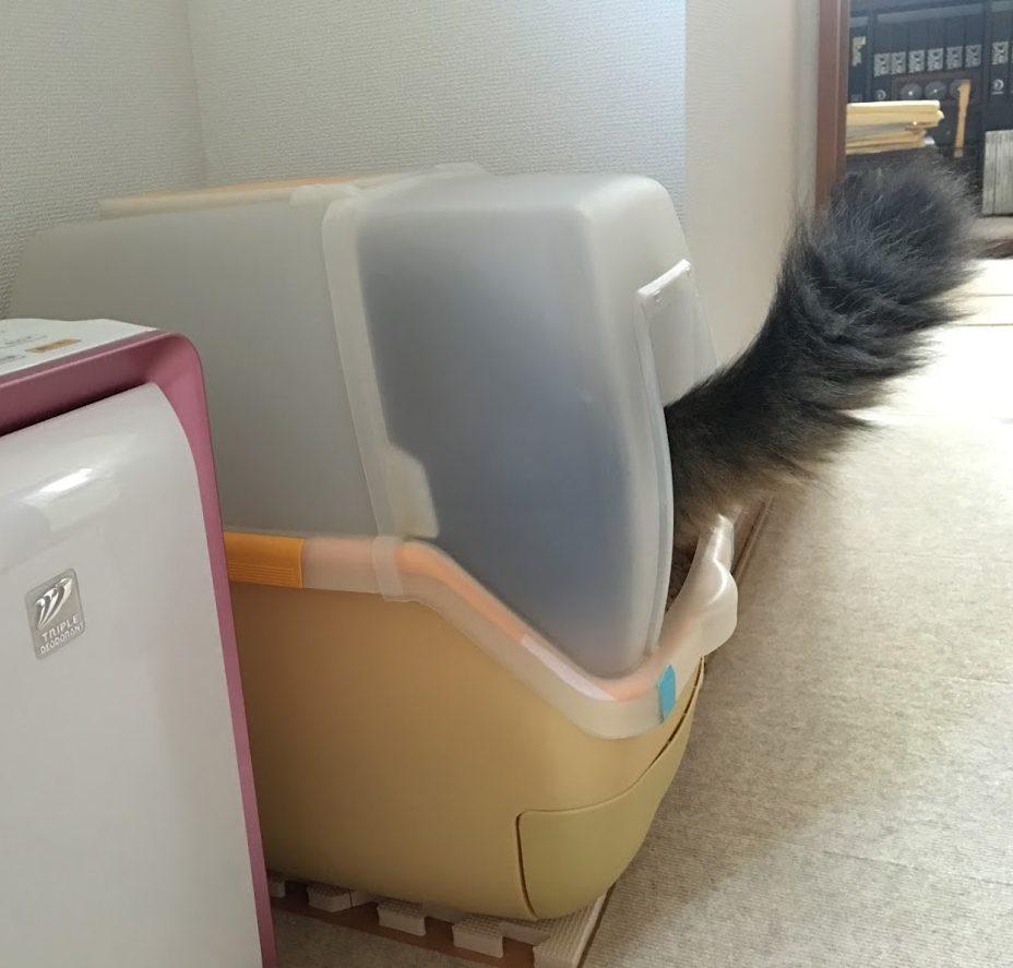 猫がトイレ使用中