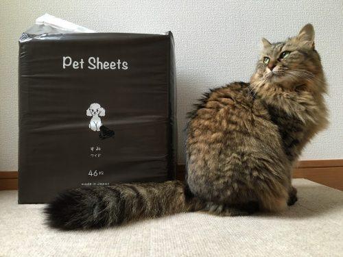 ペットシーツ1袋の大きさを猫で比較した