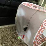 穴があいたプレイキューブで遊ぶ猫