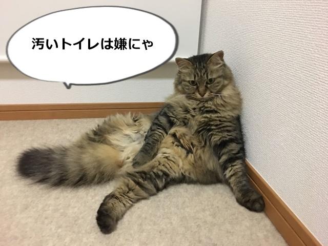 壁にもたれて座る猫