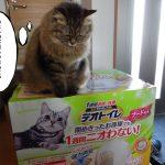 届いたデオトイレの箱に乗る猫