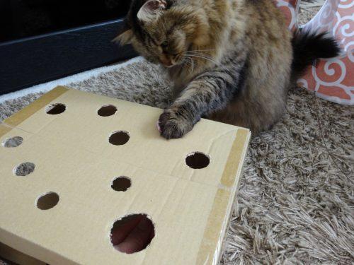 ねずみたたきで遊ぶ猫