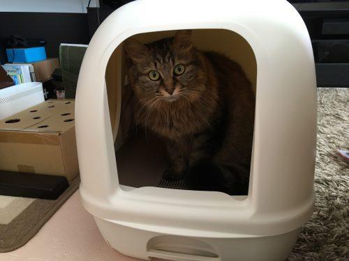 準備前のデオトイレに入る猫