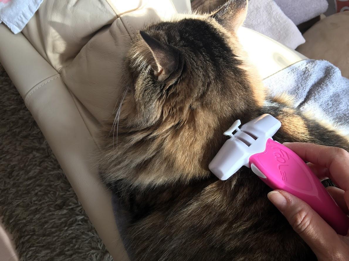 フーリーイージーを猫に試してみる