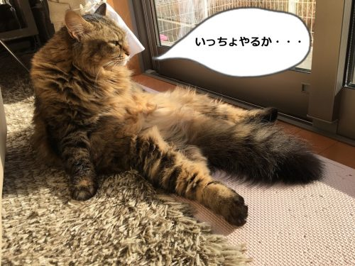 重い腰を上げようとする猫