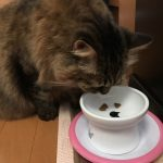 ごはんを食べようとする猫