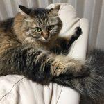 前屈する猫