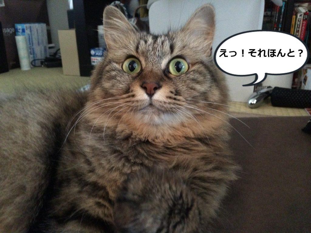 驚いたような猫