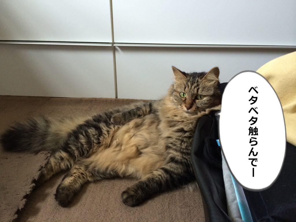 ヤル気のない猫
