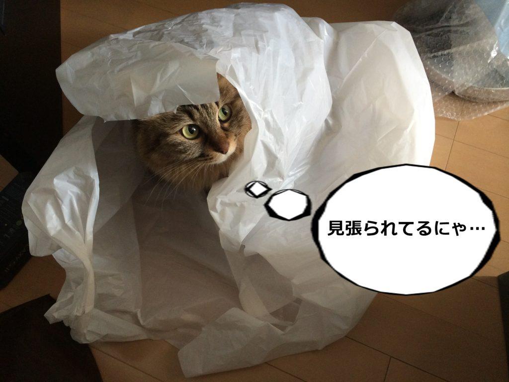 ビニール袋に入った猫