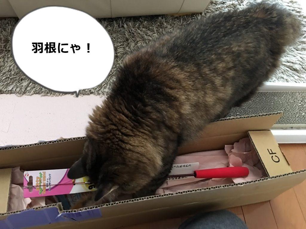 届いたおもちゃに手を出す猫