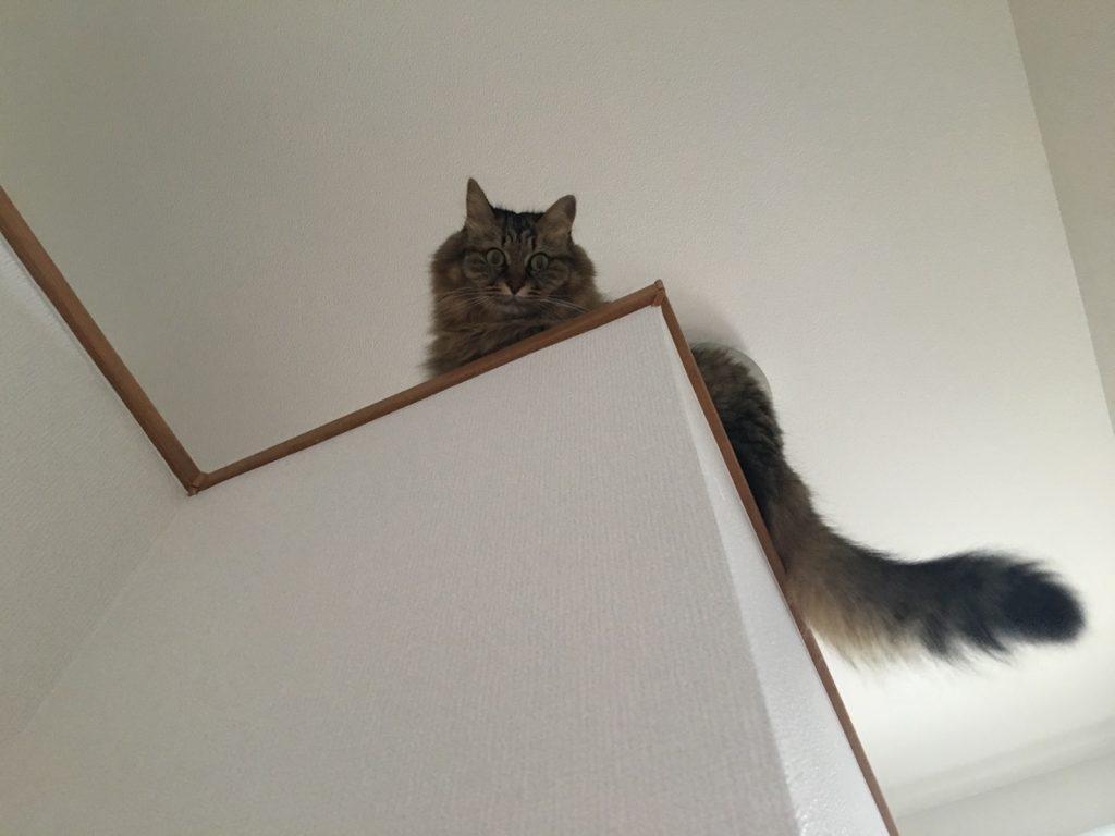 上から下をみる猫
