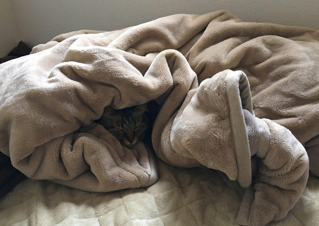 毛布に潜り込んんで寝る猫