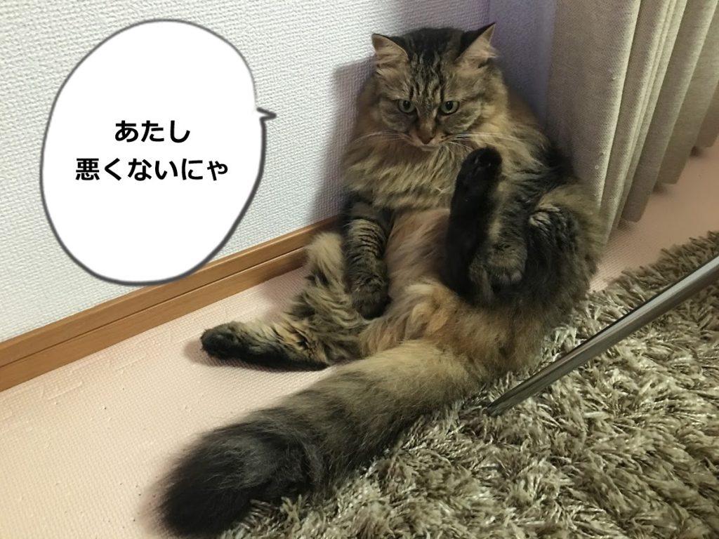 ちょっと怒ってる顔の猫