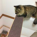 階段下をみる猫