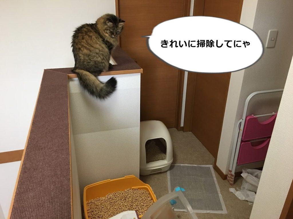 トイレ掃除をチェックする猫