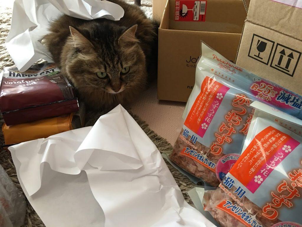 届いた荷物を見る猫