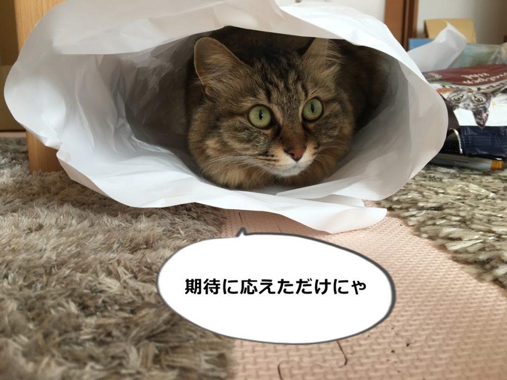 クラフト紙のトンネルにもぐった猫