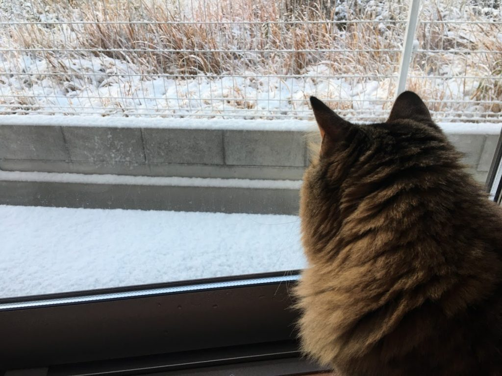 積雪を見る猫