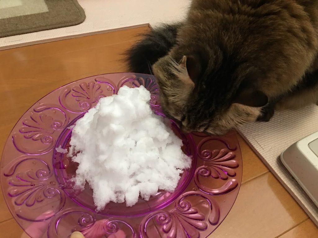 お皿に盛った雪をチェックする猫