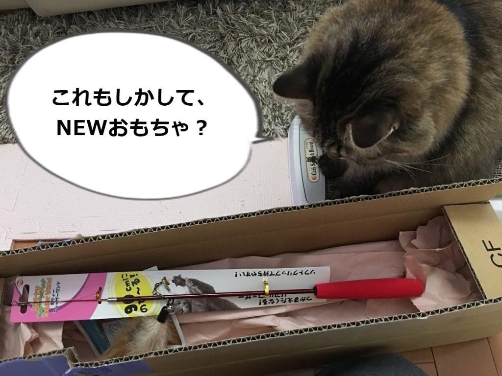 届いたおもちゃに気付く猫