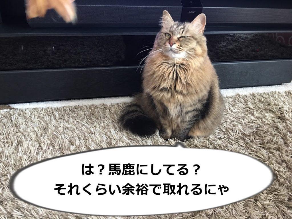 ねこじゃらしをにらむ猫
