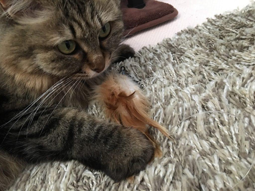 ねこじゃらしを捕まえた猫