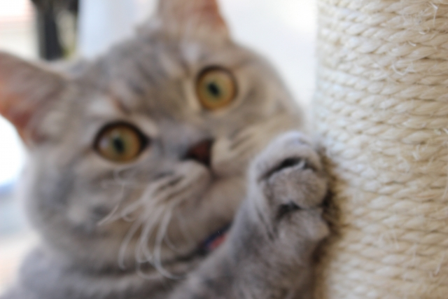 麻の爪とぎを使う猫