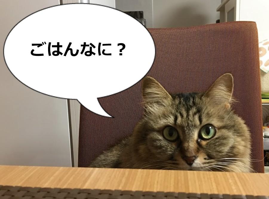 食卓のイスに座る猫