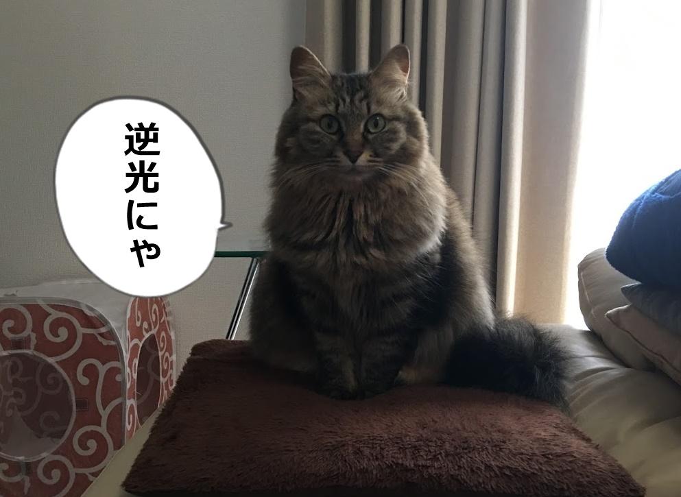 逆光のなかこちらを見る猫