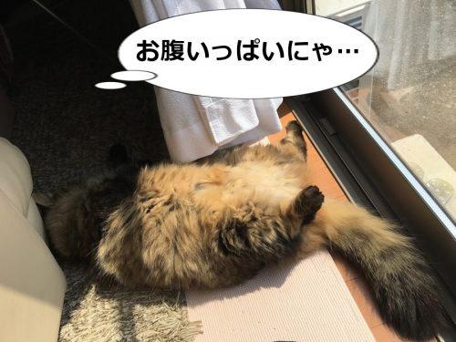 お腹いっぱいの猫