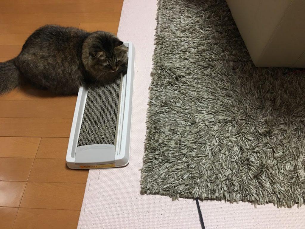 ラグの下の紐を狙う猫