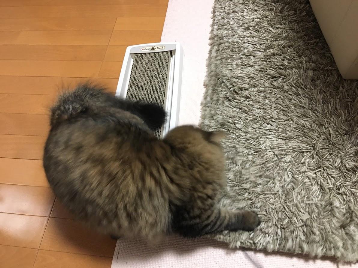 ラグの下の紐を捕まえる猫