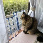 網戸の前に置かれたフィルターが邪魔な猫