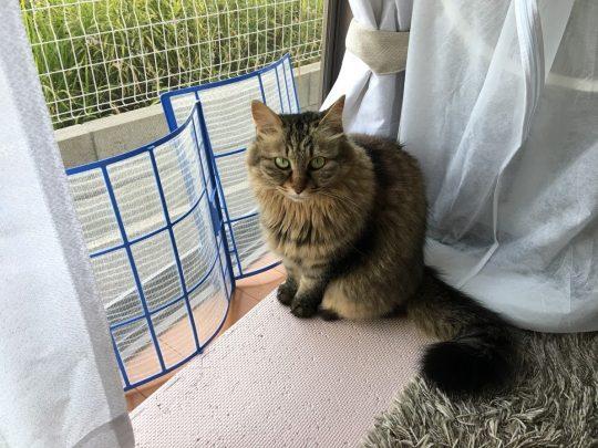 フィルターをどかすよう目で訴える猫