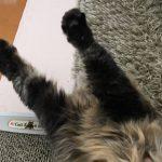 のびする猫