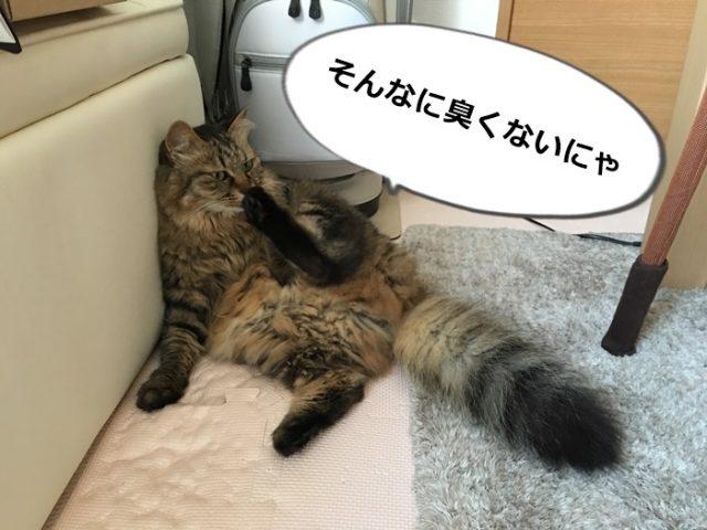 足の臭いをかぐ猫