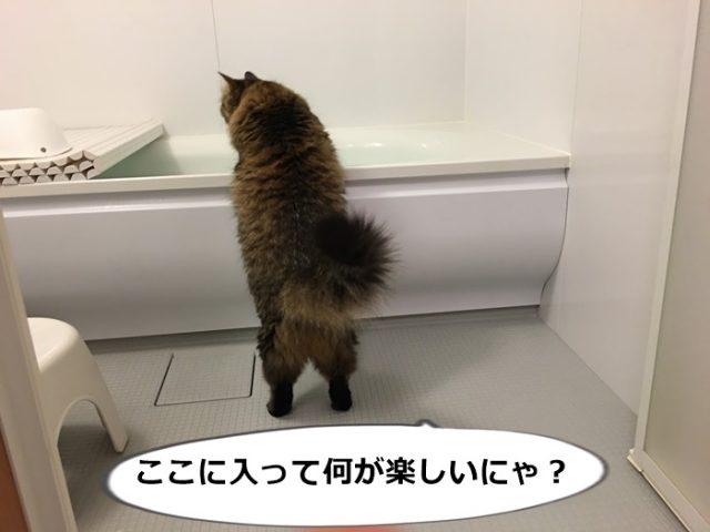 バスタブを除く猫