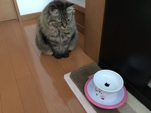 ごはん待ちの猫