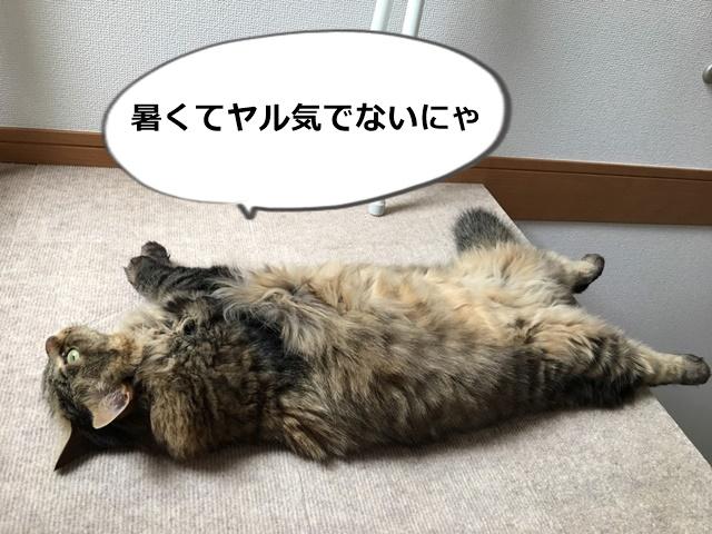 仰向けになる猫
