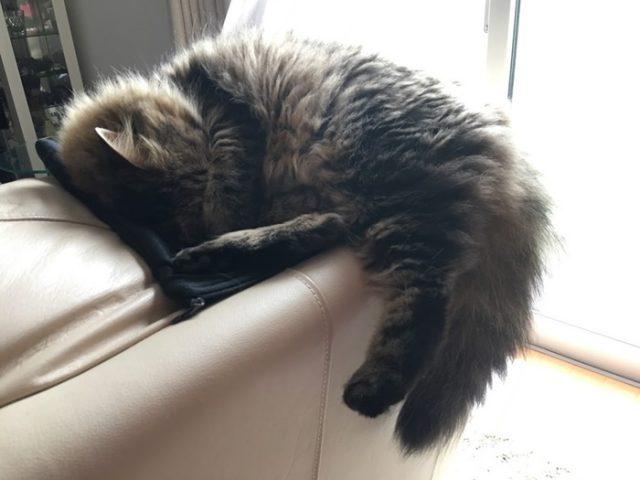 眩しそうに寝る猫