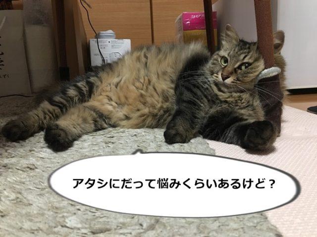 悩みがあるらしい猫