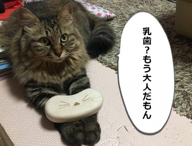 ひげケースを持った猫