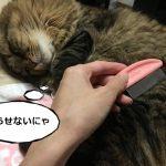 ブラッシングに抵抗する猫